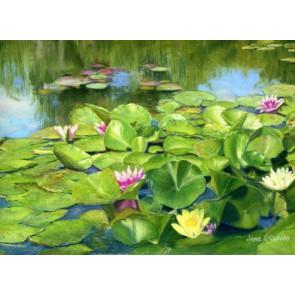 Monet's Water Lillies (NEW)