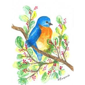Sandras Bluebird