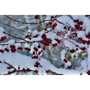 Winter Beauty (NEW)